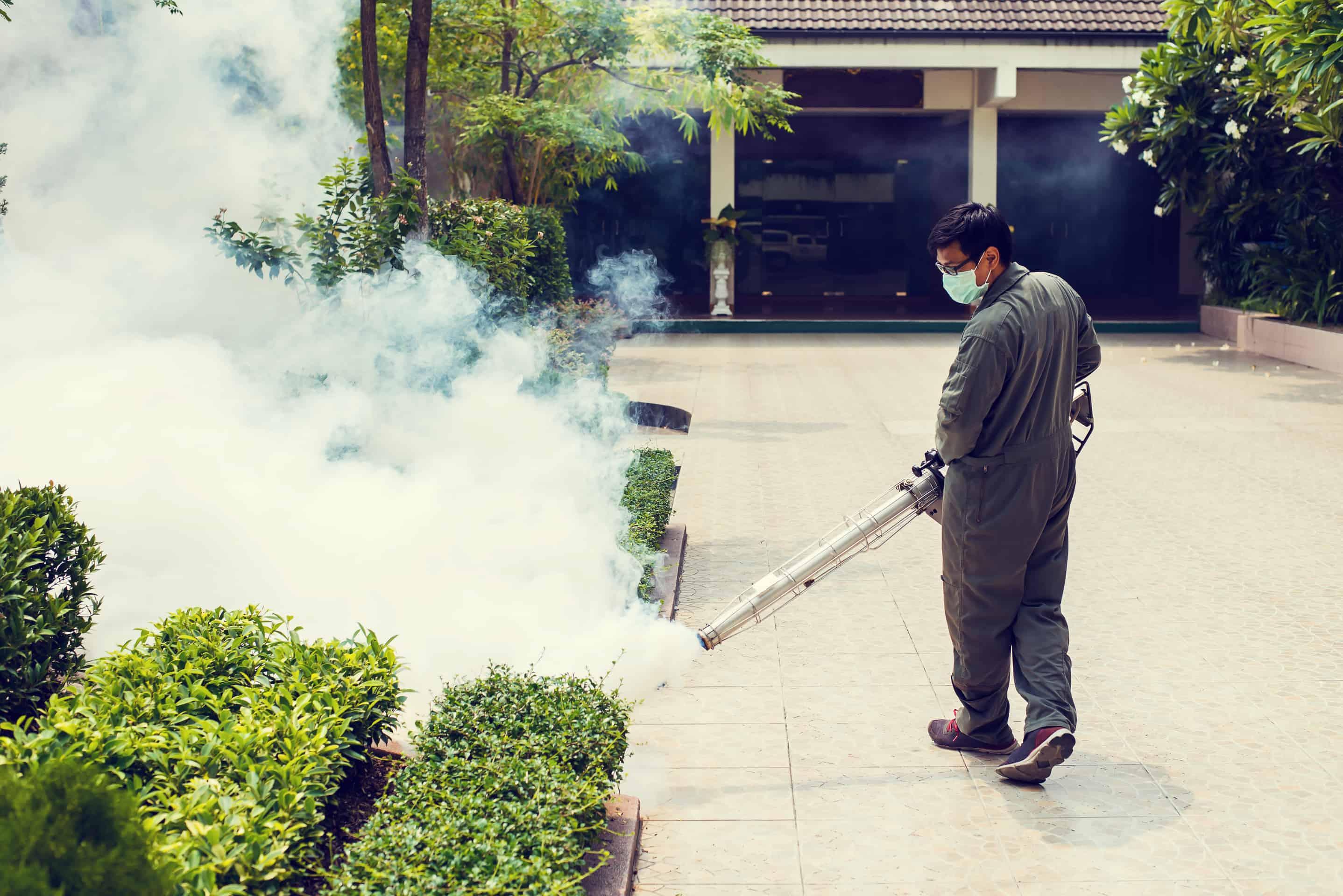 zwalczanie komarów